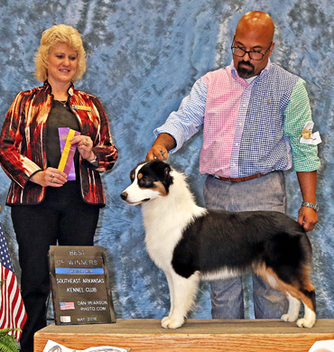 Cardi wins Best of Breed at Southeast Arkansas Kennel Club