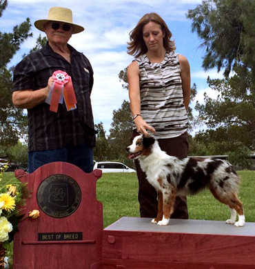 Elektra earns Best of Breed