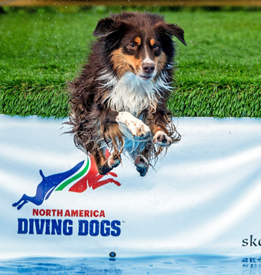 Quest jumping at North America Diving Dogs event