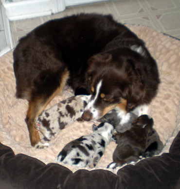 Xena with her pups