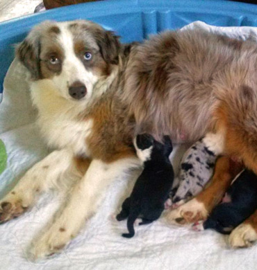 Kizzy with her pups