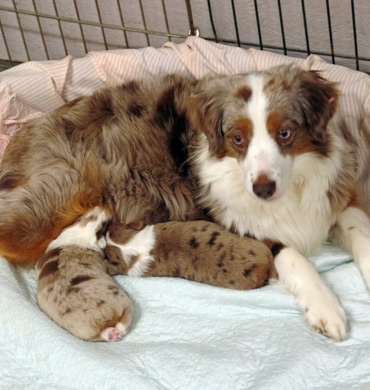 Kizzy with her puppies