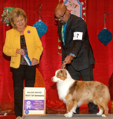 Blaze earned Best of Winners at the Brevard Kennel Club