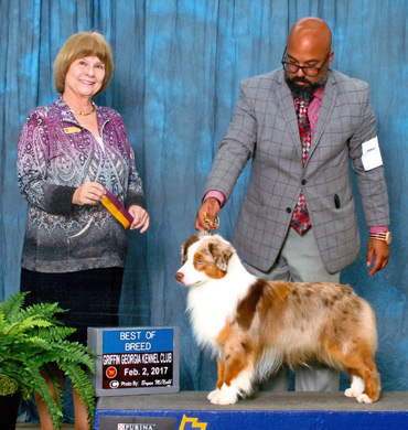 Blaze becomes an AKC Grand Champion