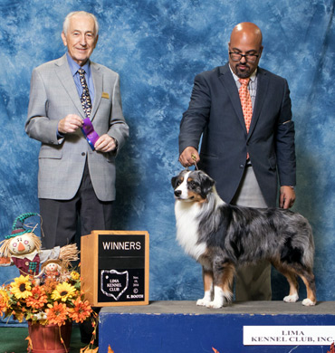 Deacon at Lima Kennel Club