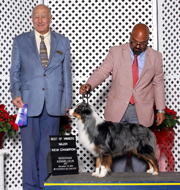 Deacon at Savannah Kennel Club