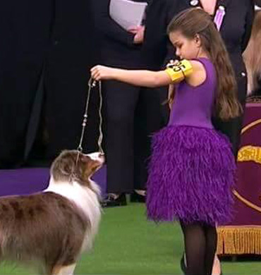 Pyro and Addison Lancaster at the Westminster Kennel Club