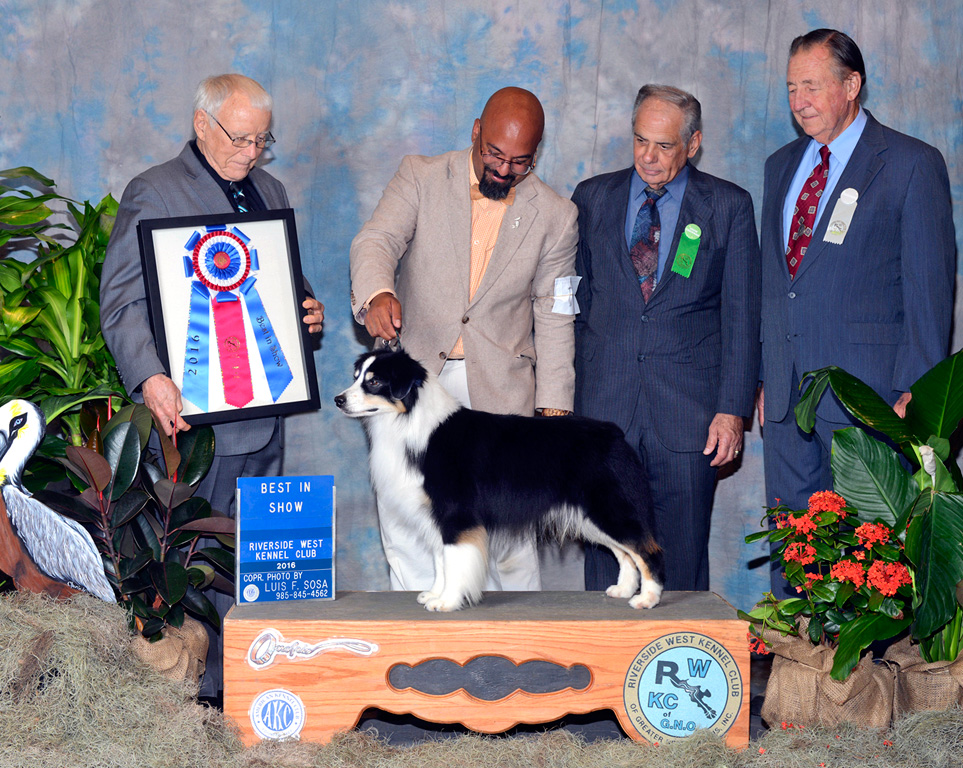 Remi earns BIS at Riverside West Kennel Club