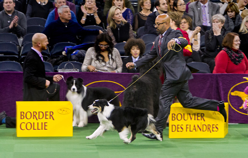 Remi Wins Best of Breed at Westminster