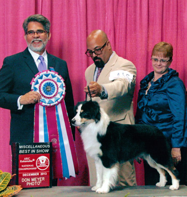 Remi Wins Miscellaneous Best in Show at AKC/Eukanuba 2013